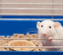 USDA removes public database of animal abuse records