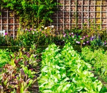 How to Create an Urban Garden that Fits in Your Space