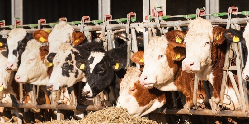 Beef and cheese have a large carbon footprint