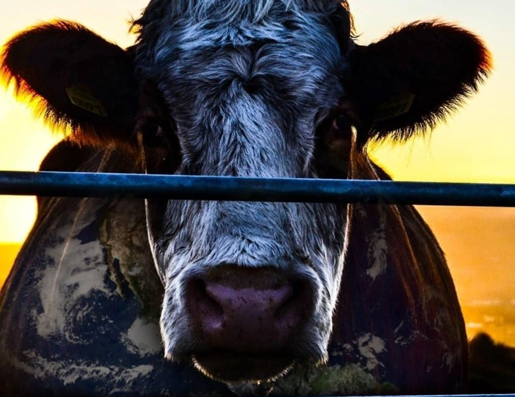 Cowspiracy movie