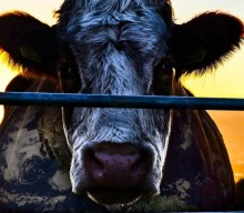 Film Review   Cowspiracy: The Sustainability Secret