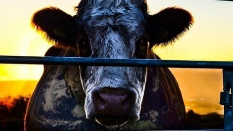 Film Review | Cowspiracy: The Sustainability Secret