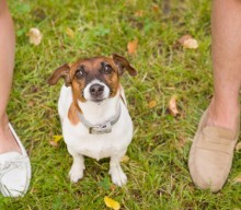 Safe, Eco-Friendly Pet Food & Products for Your Fur Babies