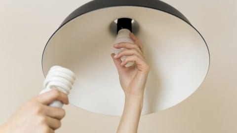 Green News: Oil-Eating Bacteria & Free LED Bulbs
