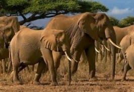 Group logo of Elephants